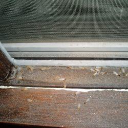 Termite_P1180005