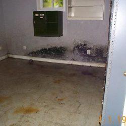 mold_basement_1
