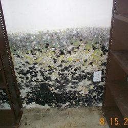 mold_basement_3