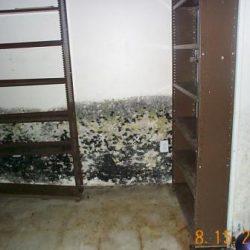 mold_basement_7