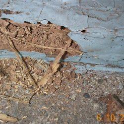 termite_live