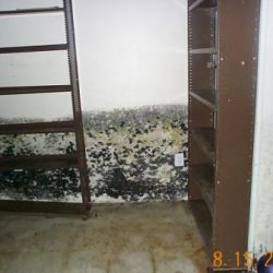 mold_basement_7