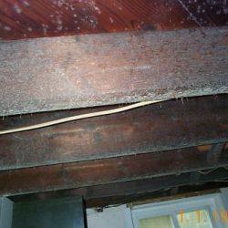 mold_basement_8